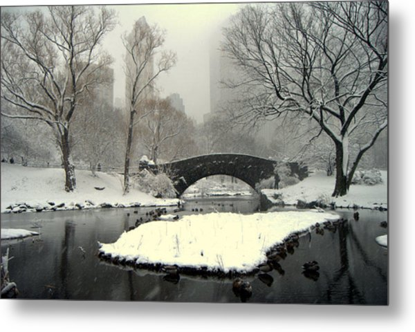 Where The  Ducks Go When It Gets All Frozen Over Metal Print
