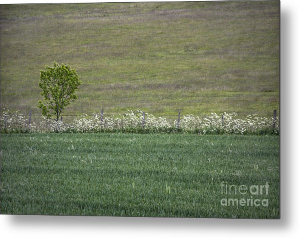 Where The Grass Is Greener Metal Print