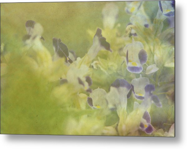White And Violet Flowers Metal Print