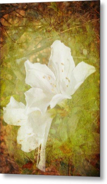 Metal Print featuring the photograph White Azalea by Judy Hall-Folde