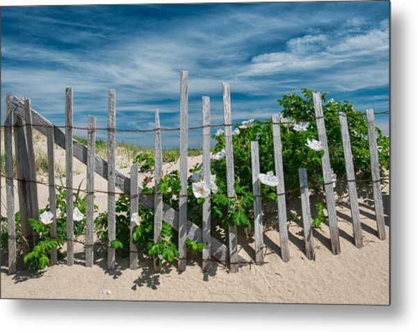 White Beach Roses Metal Print
