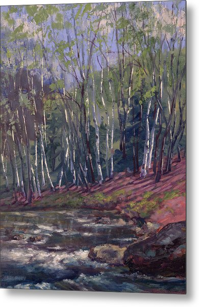 White Birches On Otter Brook Metal Print