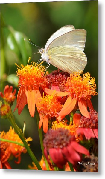 White Butterfly On Mexican Flame Metal Print