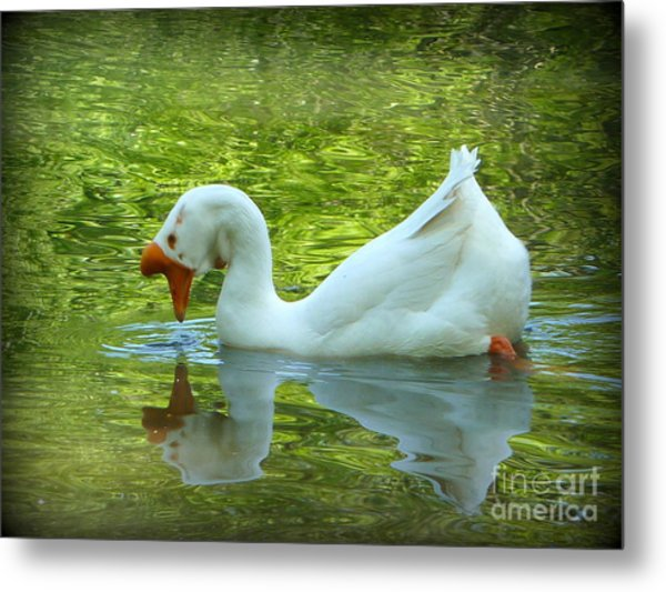 White Chinese Goose Curtsy  Metal Print