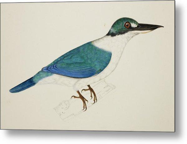 White-collared Kingfisher Metal Print
