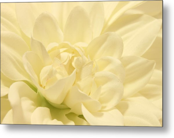 White Dahlia Dreams Metal Print