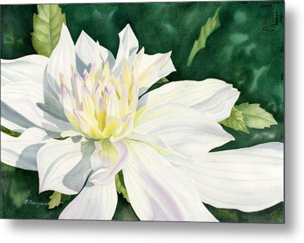 White Dahlia - Transparent Watercolor Metal Print