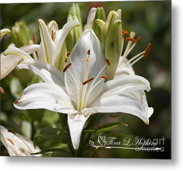 White Day Lily 20120615_36a Metal Print