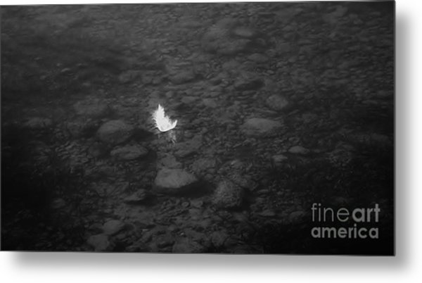 White Feather Metal Print by Michelle O'Neill