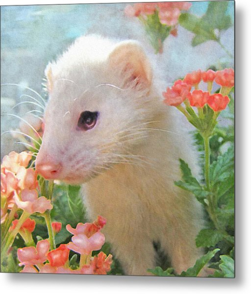 White Ferret Metal Print