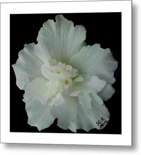 White Flower By Saribelle Rodriguez Metal Print