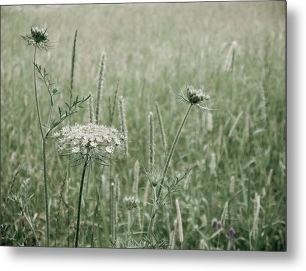 White Flower In A Meadow Metal Print by Rob Huntley