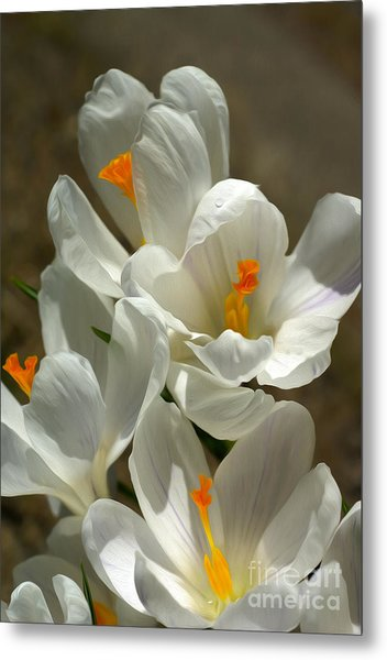 White Flowers Metal Print by Nur Roy