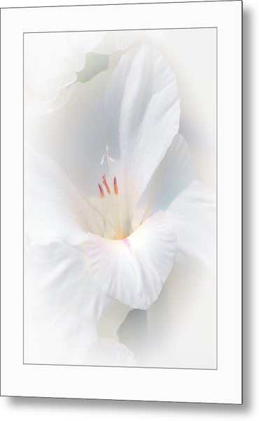 White Glad Metal Print