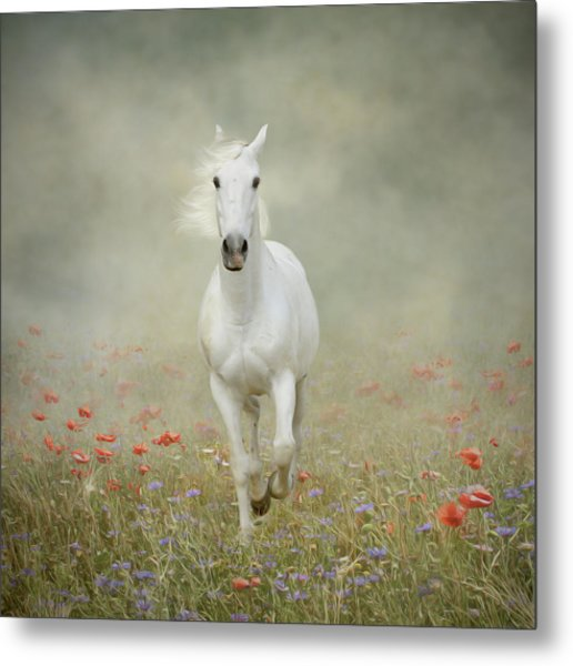 White Horse Running Through Poppies Metal Print by Christiana Stawski