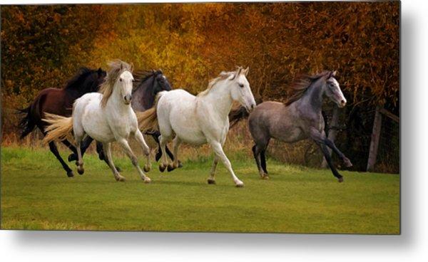 White Horse Vale Lipizzans Metal Print