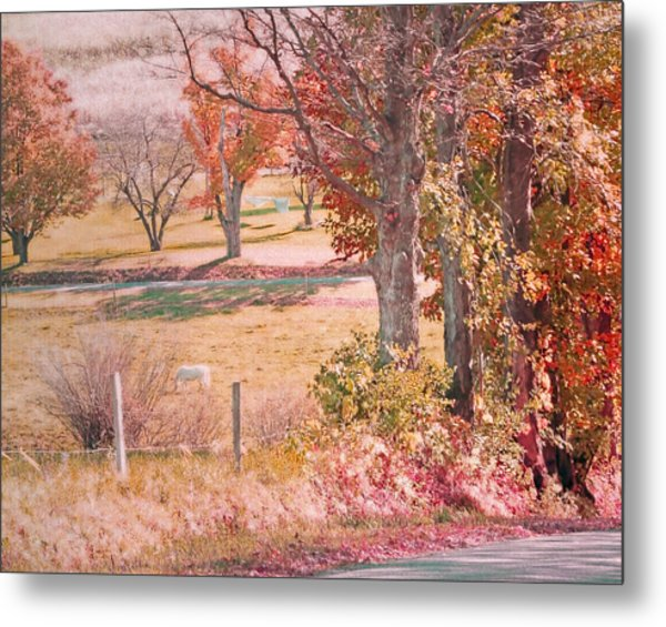 White Horse With Orange And Green Autumn Colors Metal Print