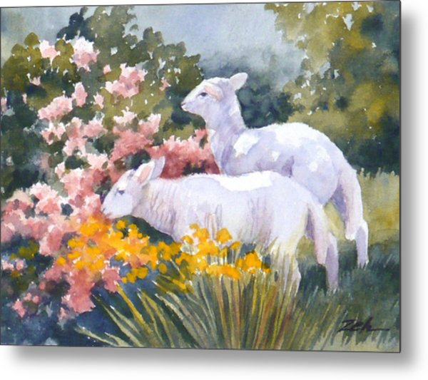 White Lambs In Scotland Metal Print