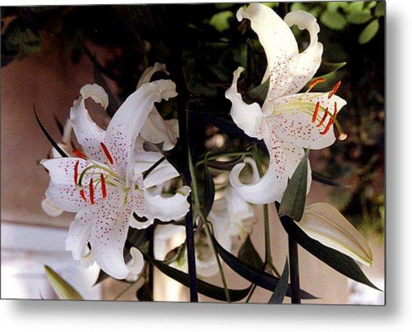 White Oriental Lilium  Metal Print