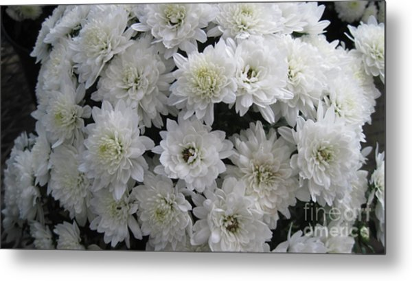 White mums photograph by donna cavender white mums metal print by donna cavender mightylinksfo