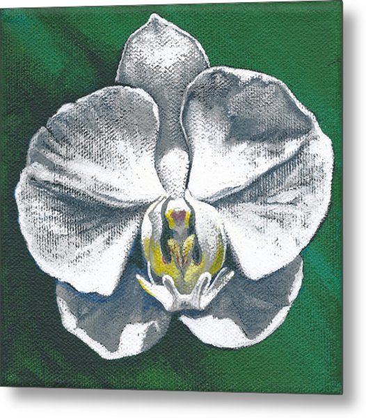 White Orchid I Metal Print