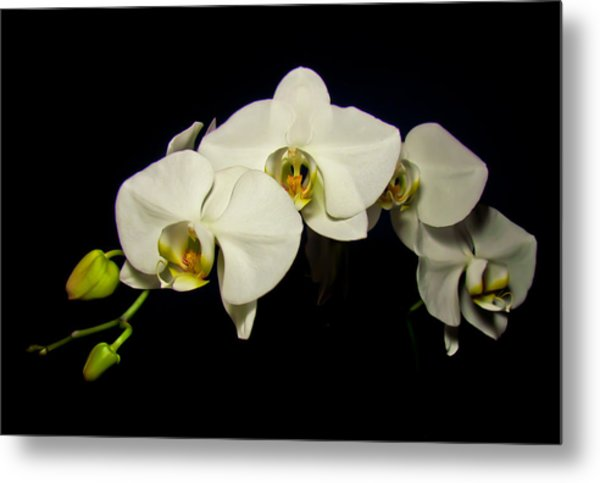 White Orchid II Metal Print