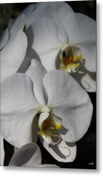 White Orchid Metal Print by Mark Steven Burhart