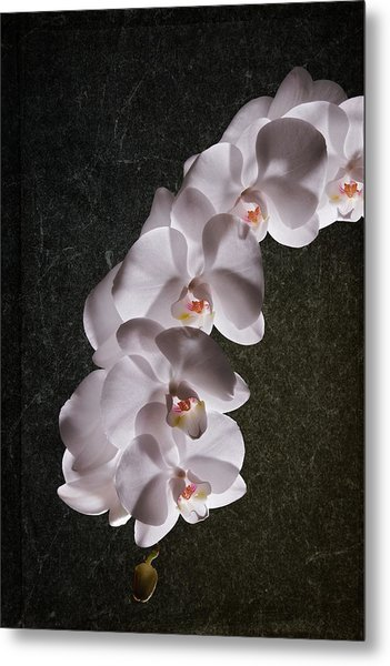 White Orchid Still Life Metal Print