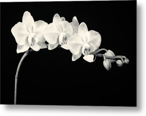 White Orchids Monochrome Metal Print