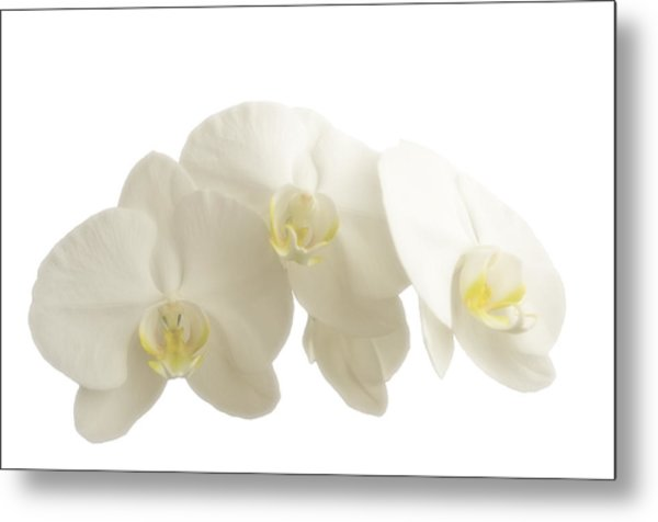 White Orchids On White Metal Print