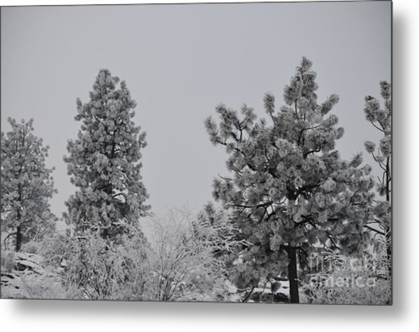 White Out Metal Print by Greg Patzer