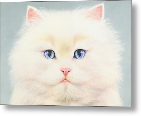 White Persian Metal Print