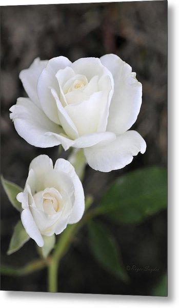 White Rose Duo Metal Print