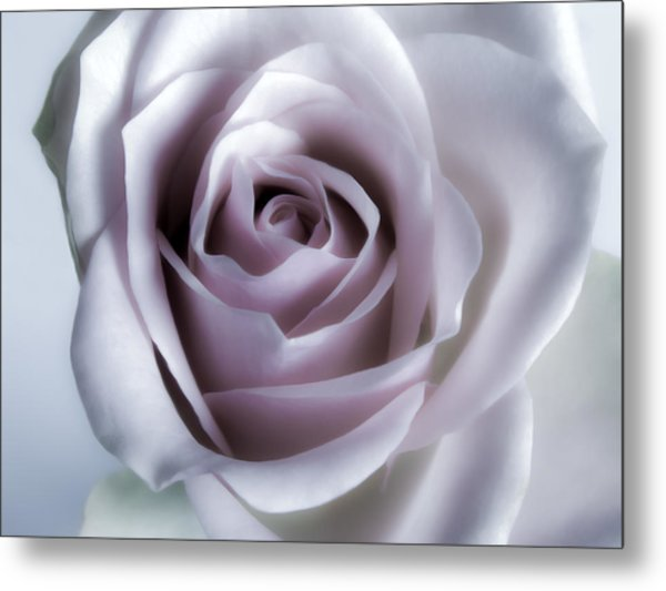 White Roses Flowers Art Work Photography Metal Print