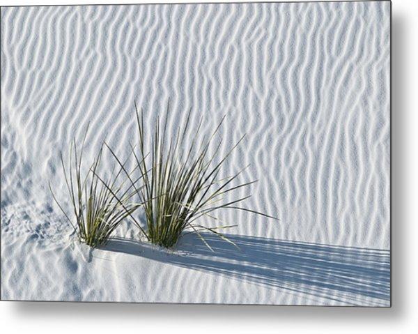 White Sands Grasses Metal Print