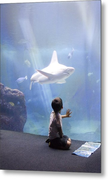 White Shark And Young Boy Metal Print