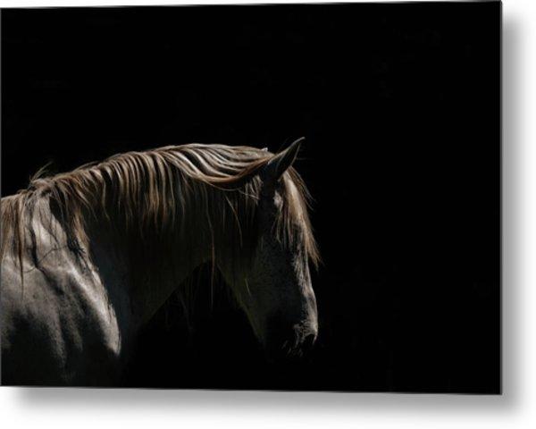 White Stallion - Black Background Metal Print by Ryan Courson Photography