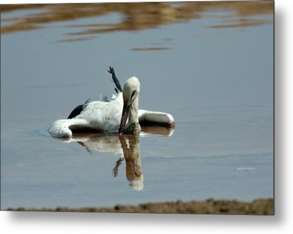 White Stork Drowning In The Dead Sea Metal Print