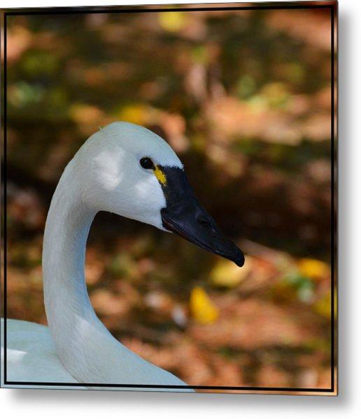 White Swan Metal Print by Helene Dignard