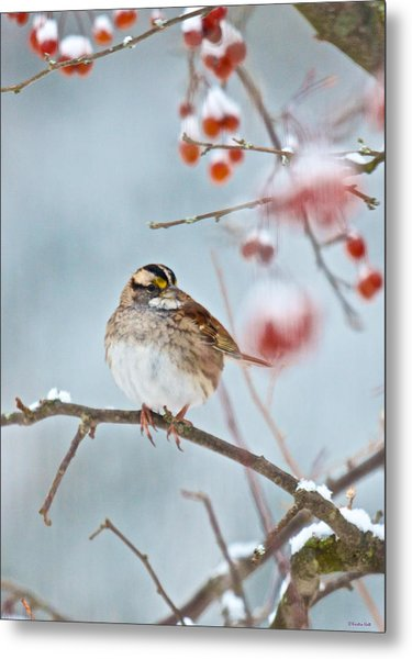 White-throated Sparrow Braving The Snow Metal Print