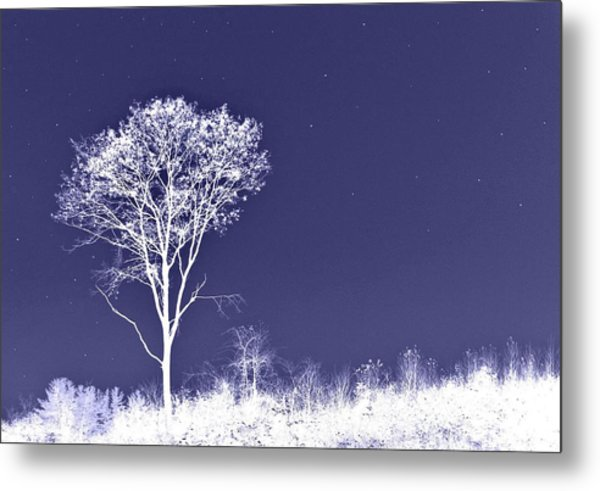 White Tree - Blue Sky - Silver Stars Metal Print