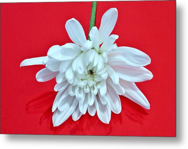White Flower On Bright Red Background Metal Print