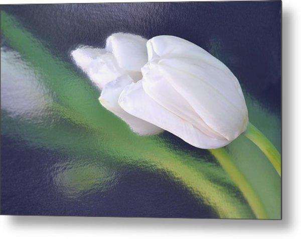 White Tulip Reflected In Dark Blue Water Metal Print