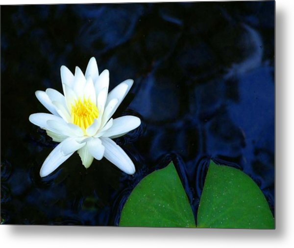 White Water Lilly Abstract Metal Print by Judith Russell-Tooth