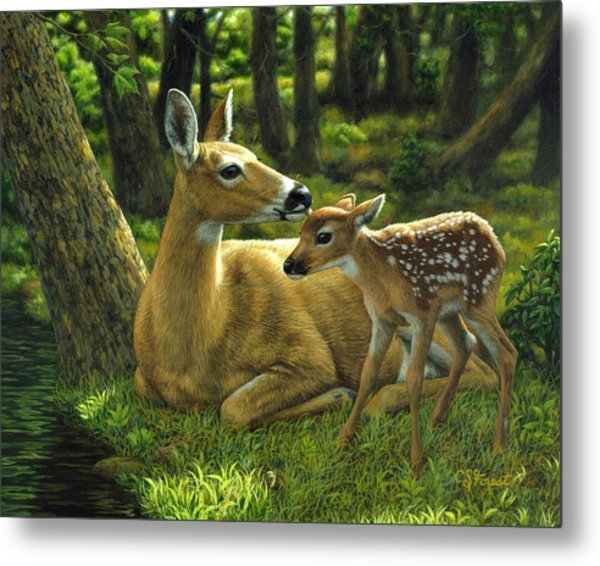 Whitetail Deer - First Spring Metal Print