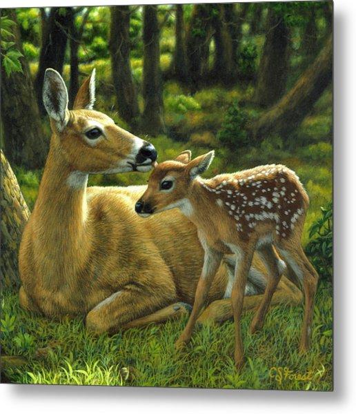 Whitetail Deer - First Spring - Square Metal Print