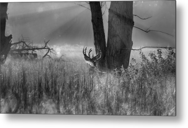 Whitetail Morning Metal Print
