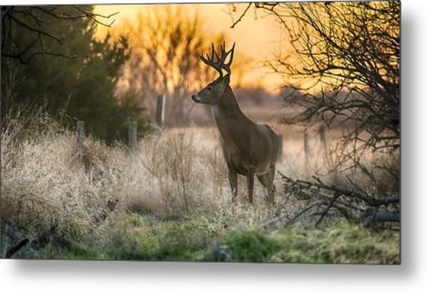 Whitetail Sunset Metal Print