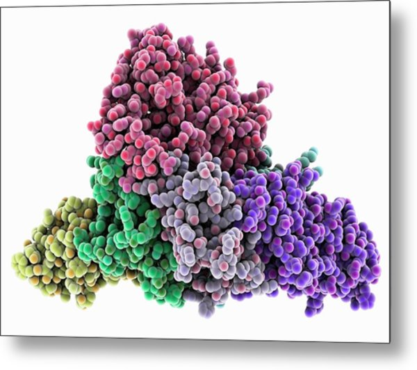 Whooping Cough Toxin Molecule Metal Print by Laguna Design