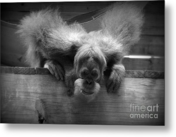 Who's There? Metal Print